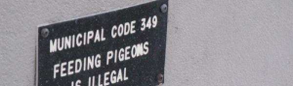 municipal ordinance- don't feed pigeons