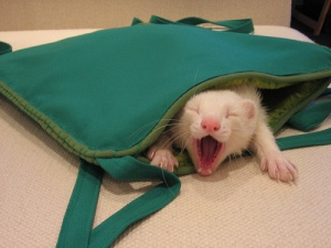 Ferret's new hammock
