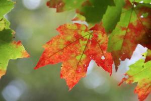 colored leaf