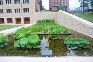 stormwater treatment basin with aquatic plants